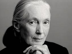 Jane Goodal plagiarism